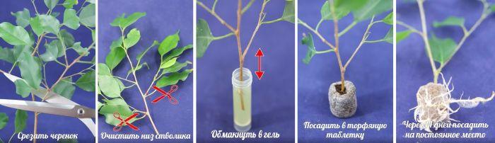 гель-укоренитель «фитоклон » (clonex)   для черенков растений 4 мл